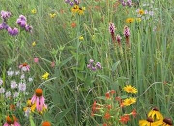 Mixed Grass Meadow Mix 105