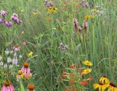 Mixed Grass Meadow Mix 113
