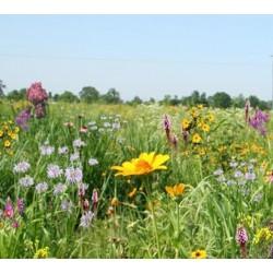 Mix 117 - Coastal Tall Grass Meadow Mix
