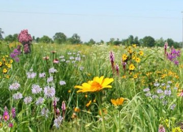Tall Grass Meadow Mix