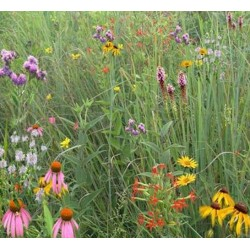 Mix 122 - Coastal Mixed Grass Meadow Mix
