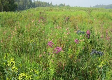 Mix 129 Wetland Meadow