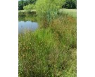 Mix 131 - Southern Wetland and Pond Edge Mix
