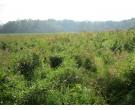 Mix 158 - Southern Emergent Wetland Mix