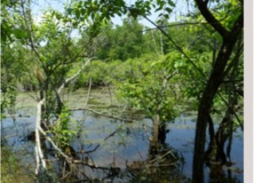 Retention Basin Wildlife Mix 163