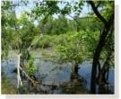 Mix 163 - Northern Retention Basin Wildlife Mix