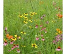 Mix 136 - Northern Wildflower Garden Mix