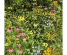 Mix 182 - Coastal Plain Woodland Edge/Part Shade Mix