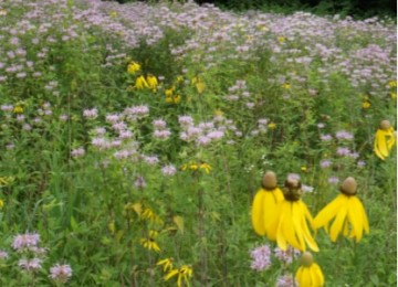 annual and perennial native and garden wildflower mix - Wildflower Garden