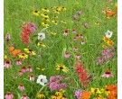 Mix SS-W1 - Southern Pollinator Conservation Mix