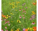 Mix NS-D1 - Northern Pollinator Conservation Mix