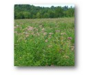 Mix SS-MH1 - Southern Monarch Habitat Seed Mix