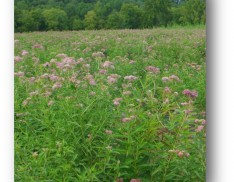 Monarch Habitat Seed Mix NS-MH1