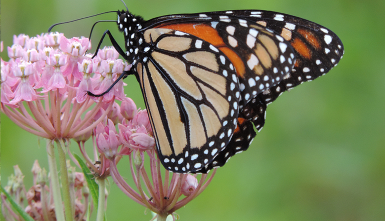 Conserving pollinators to protect our food supply and protecting endangered species.