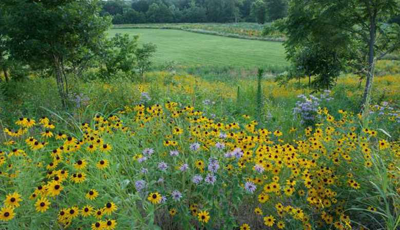 Native plants and custom mixes for any area, be it wet, dry, shady, rocky, sandy, sunny, sloped or boggy.