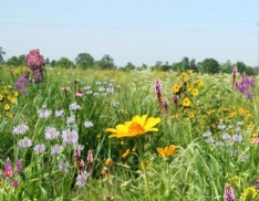Tall Grass Meadow Mix 101