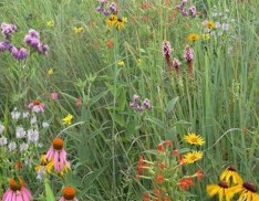 Mixed Grass Meadow Mix 105