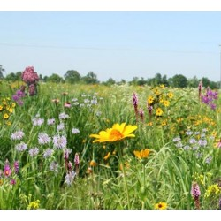 Mix 110 - Southern Tall Grass Meadow Mix
