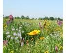Mix 118 - Coastal Tall Grass Meadow Mix