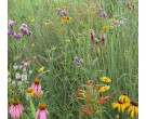 Mix 121 - Coastal Mixed Grass Meadow Mix