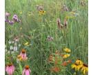 Mix 124 - Coastal Mixed Grass Meadow Economy Mix