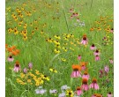 Mix 173 - Northern Imazapic Herbicide Tolerant Native Wildflower Mix