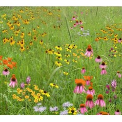 Mix 174 - Southern Imazapic Herbicide Tolerant Native Wildflower Mix