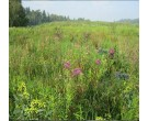 Mix 128 - Northern Wetland Meadow Mix