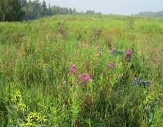 Mix 129 Wetland Meadow
