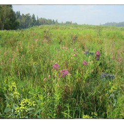 Mix 129 - Southern Wetland Meadow Mix