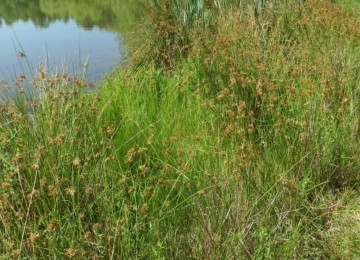 Wetland and Pond Edge Mix