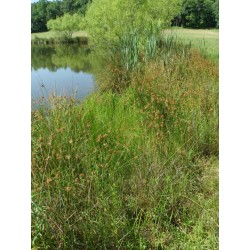 Mix 130 - Northern Wetland and Pond Edge Mix