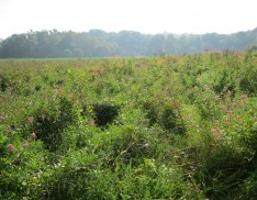 Emergent Wetland Mix 157