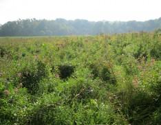 Emergent Wetland Mix 158
