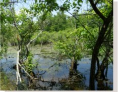 Retention Basin Wildlife Mix 164