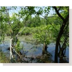 Mix 166 - Southern Retention Basin Economy Mix