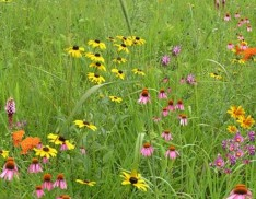 Wildflower Garden and Landscaping Mix 135
