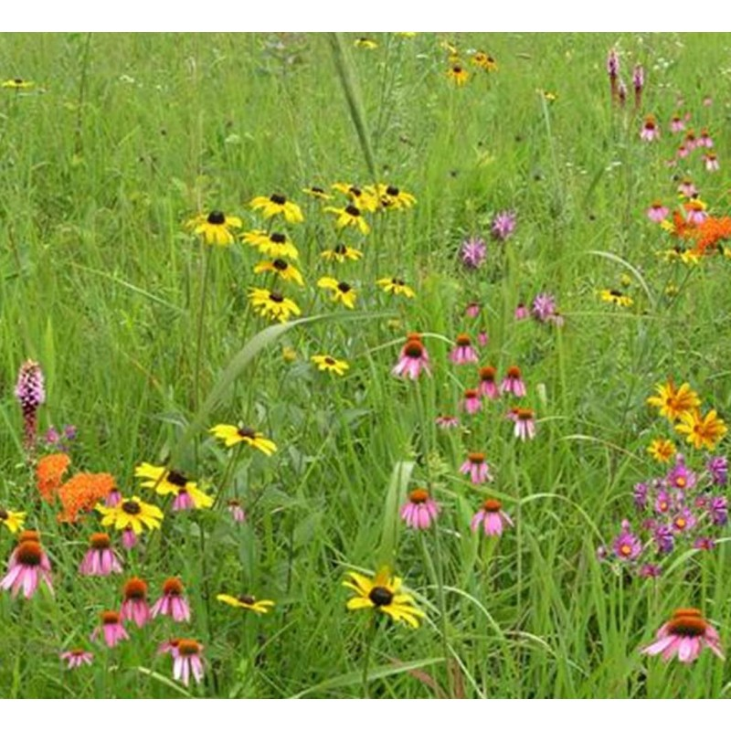 wildflower-garden-and-landscaping-mix Native Wildflower Garden Designs on wild garden design, herb garden design, cactus garden design, organic garden design, sand design, gravel design, small garden design,