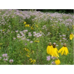 Mix 175 - Northern Quick Color Annual Native and Garden Wildflower Mix