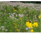 Mix 177 - Northern Annual and Perennial Native Wildflower Garden Mix