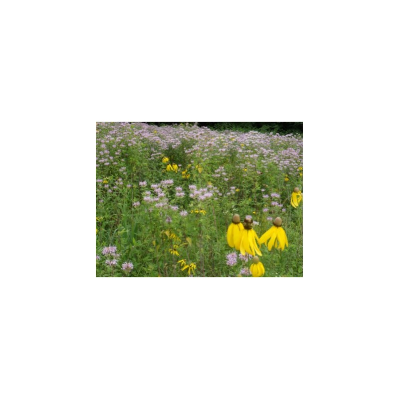 Mix 178 Southern Annual and Perennial Native Wildflower