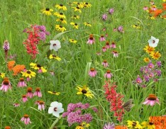 Pollinator Conservation Mix