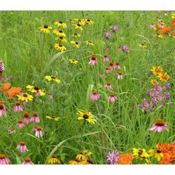 Mix NS-W1 - Northern Pollinator Conservation Mix